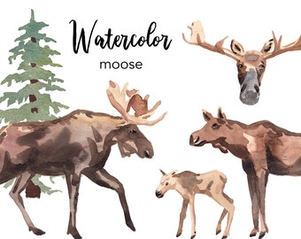 WATERCOLOR CLIPART, moose clipart, watercolour woodland animal deer clipart set, commercial use, png files, clip art, png, digital, nursery