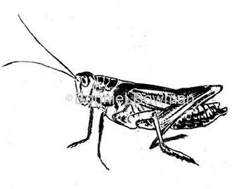 Grasshopper  Thermofax Silk Screen Side View Small