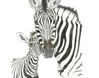 Zebras fine art print, zebra print, mother and baby zebras