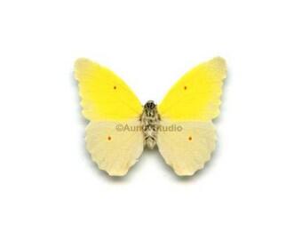 12 Small Paper Butterflies, Realistic 1 inch Paper Butterflies - Yellow Butterfly