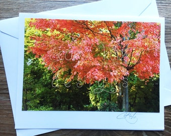 Fall Foliage Greeting Card with Envelope / Photograph Shot and Processed by Carol Kutz / Blank Greeting Card / All Occasion / Thank You Card
