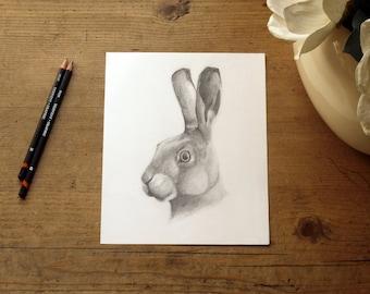 Original pencil drawing entitled 'Hare'. A British Wildlife illustration by Thomas Harrison