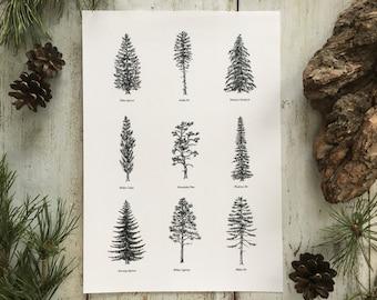 Evergreen Trees II - Print A4