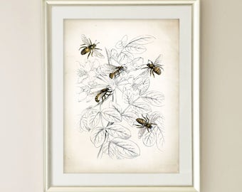 Vintage Honey Bee Art Print. Farmhouse Decor. Farmhouse Wall Decor. Farmhouse Art. Kitchen Art. Dining. Gift. Beekeeping Print. Bee Print 70