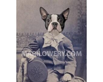 5 x 7 Inch Boston Terrier Anthropomorphic Animal in Suit Dog Art Print