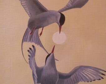 Arctic Terns In Flight, 2015, Limited Edition A4 Giclee Print, Richard Hull Fine Art