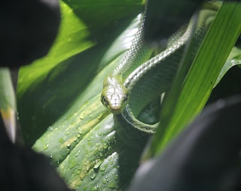 Close up snake photography print - at the zoo