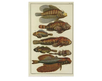 Fish Print Book Plate SALE Buy 3, get 1 FREE