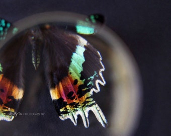 Butterfly Photography- Sunset Moth Photograph, Magnified Butterfly Photo, Abstract Photography, Butterfly Wings, Moth Butterfly Wall Art