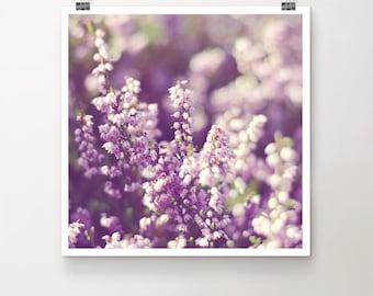 BlossomSea - FineArt Print Nature Macro Blossom Heath Erica Heather Muir