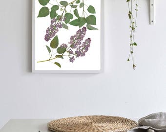 Lilac Botanical Print, Spring Flower, Pressed Plant, Botanical Art, Herbarium, Nature Decor, Purple Lilac, Flower Lover Gift, Gardener Gift