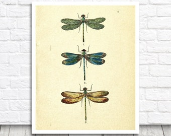 Vintage Dragonfly Art Print , Digital Graphics, Animal Printable Wall Art, Dragonflies Decor, Dragonfly Print, Dragonfly Printable Poster