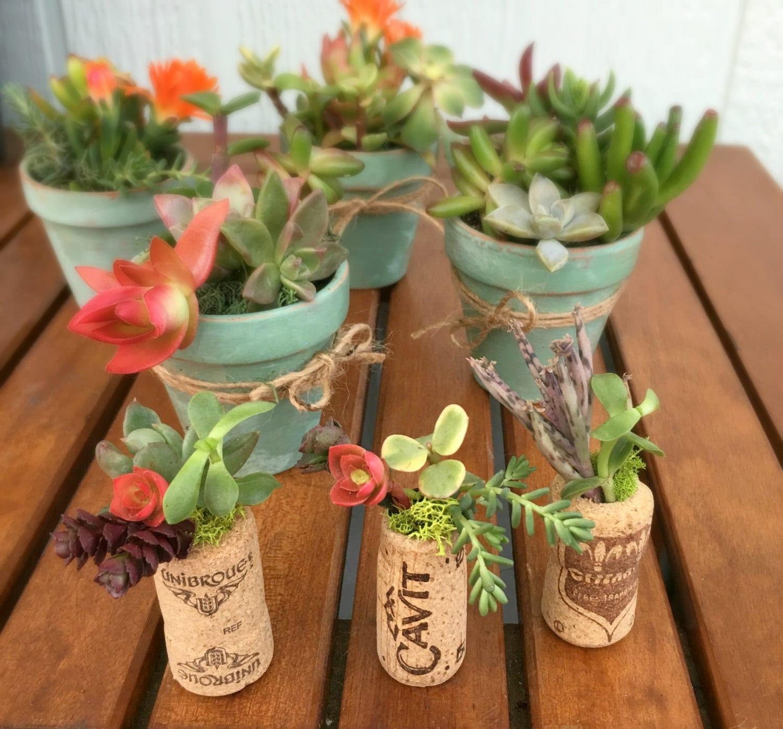 Cork Succulent Party Favors, Wine Cork Succulent Garden, Cork ...
