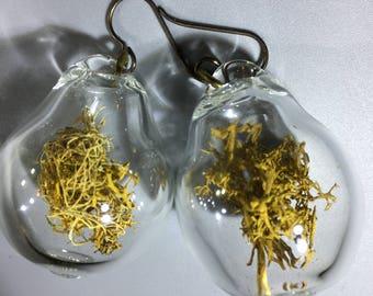 Terrarium Jewelry-Handblown Glass Bulbs with Lichen, Nickel Free Shepherd's Hook