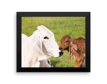 Grey Brahman Cow with Red Brahman Calf Framed photo paper poster