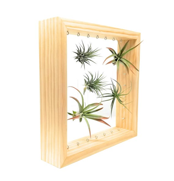 Funky Air Plant Wall Decor Pattern - Wall Art Collections ...