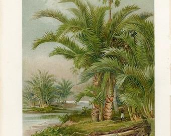 Palm Trees southern Asian Authentic print decorative art wall art botanical art German Encyclopedia Color Chromolithograph print