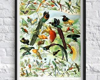 Vintage birds print wall art decor science print zoology print ornithology print birds illustrations antique book plate print