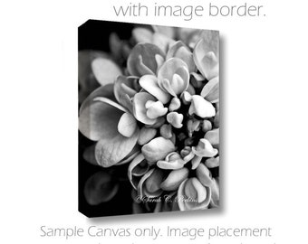 Living Room Wall Art-Hydrangea Photography-Flower Photography-B&W Wall Art-Fine Art Photography-Gallery Wrap Canvas-Floral Wall Decor