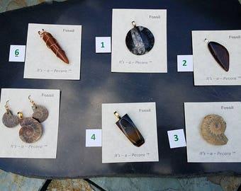 Fossils by Pecora set II, Dinosaur Bone, Belemnitida, Ammonite, AZ petrified wood variable pricing on this listing