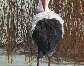 "White Stork stork, ""Buy one, choose another free""  wildlife, animal prints, bird prints, wildlife prints, animals, birds"