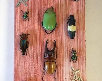 Oddity Exotic Beetle Board Wall Hanging