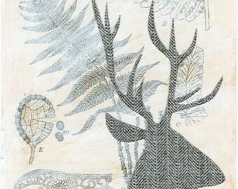 Tweed Deer - 4x6 Art Print
