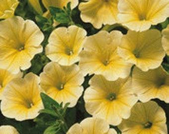200 seeds Yellow Petunia Hybrid for hanging baskets gardens flowers rare