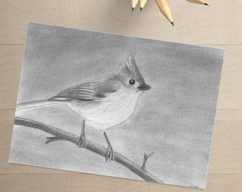 Tufted Titmouse Drawing - Tufted Titmouse - Bird Art - Bird Decor - Bird Artwork - Gray Bird - Bird Wall Decor - Bird Drawing - Gray Bird