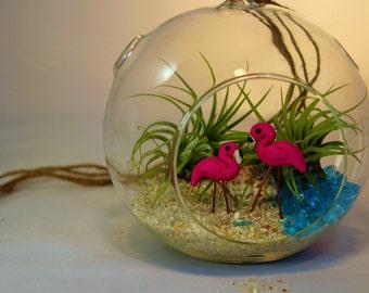 DIY Terrarium Kit, Glass Globe Terrarium with 2 Tropical Flamingos & Air Plants, Miniature Garden, Tillandsia Air Plants