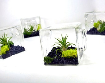 Air Plant Eco Glass Cube // Modern Air Plant Terrarium Cube, Modern Home Decor, Unique Christmas Gift, Unique Gift for Men and Women