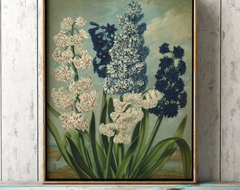 Hyacinths BOTANICAL Print, blue and white floers poster, botanical wall decor,, antique flower art print