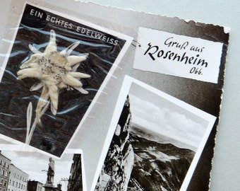 Vintage Picture Postcard with Pressed Edelweiss. Greetings from Rosenheim.