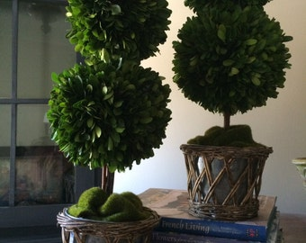 Preserved Double Boxwood Topiary