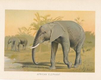 1902 Elephant Antique Print