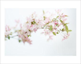 Apple Tree - Blossom - Color Photo Print - Large Photo Print - Art Nature Photography (AB01)