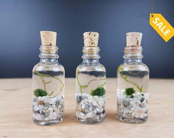 Set of 3 Java Marimo Moss Ball Terrarium for Mother's Day Gift Office Desk Accessories home Decor Party Favors Under 20