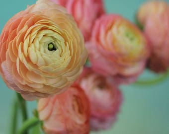Peach Ranunculus Photo, romantic photo, soft flower photo, Bedroom Decor, Cottage Chic, Ranunculus print, farmhouse decor, Flower art