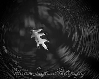 Creating ripples, leaf photography, dark photography,leaf photo, romantic, gothic photo, haunting,naturea photography,black and white photo