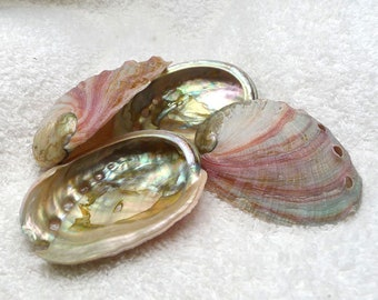 Red Abalone Seashells for Smudging or Burning Incense and Herbs, Haliotis Rufescens (1)