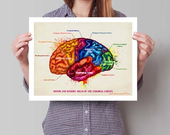 "Cerebral Cortex, 11"" x 14"" Fine Art Print, Anatomy Medical print, Neurologist Gift, Nurse gift, Neurosurgeon gift, Psychologist gift"