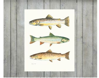 Two Browns and a Dolly, fish print, fish wall art, rainbow trout, fish illustration, rustic, watercolour
