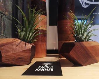 Wood air plant holder