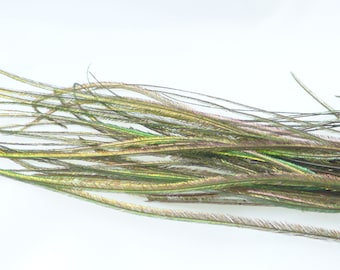 Natural peacock feathers, strands of 9-15 cm