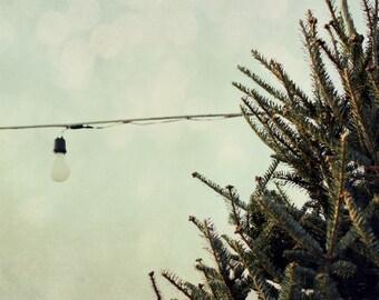 tree, nature, pine, light, teal, fine art photography