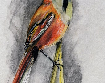 the wild bird portrait original ink and watercolor painting