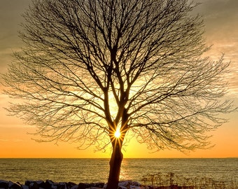 New Hampshire Seacoast Tree, Sunlight at Sunrise in New England