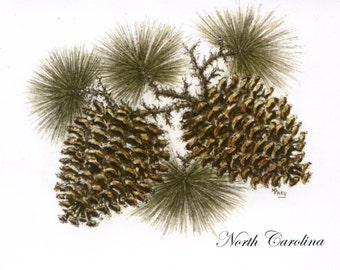 Note Cards/Pine Cones Noth Carolina