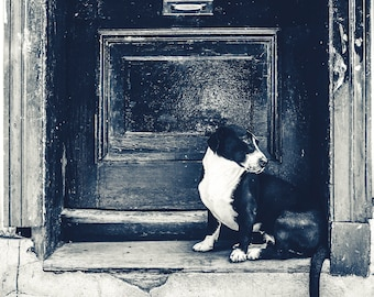 Chile Photography, Travel Photography, Old Door Photography, Dog in Door, Santiago, Valparaiso, Chile
