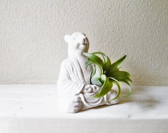 Buddha squirrel, Zen animal planter, meditating Buddha planter, air plant holder,